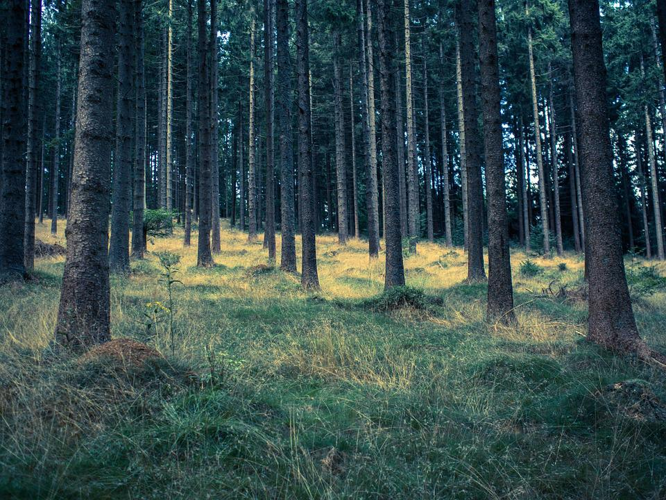 Forest, Meadow, Waldviertel, Autumn, Plant, Nature