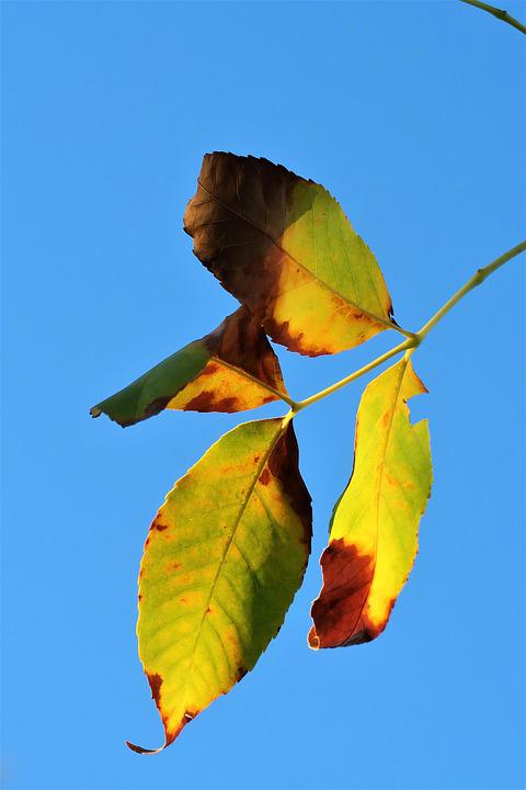 Leaves, Autumn, The Leaves Are, Sky, Nature, Plant