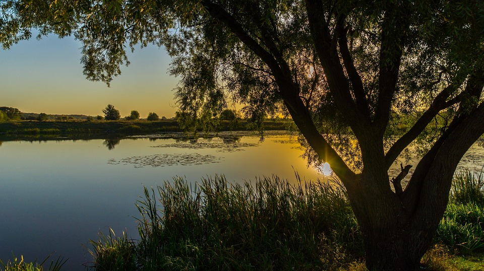 Kursk, Morning, Autumn, Pond