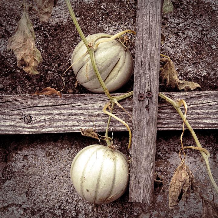 Autumn, Garden, Pumpkin