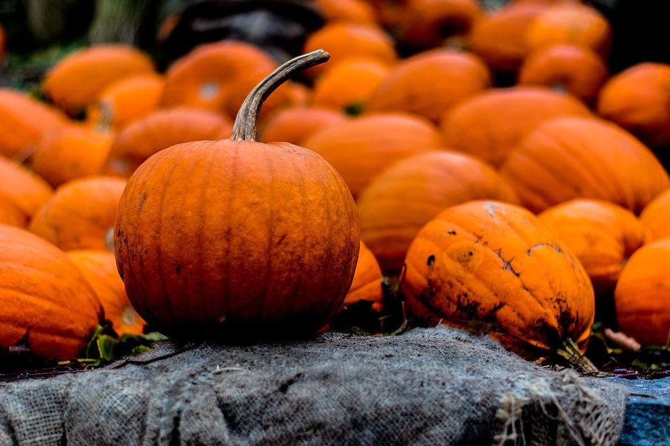 Halloween, Autumn, Pumpkin
