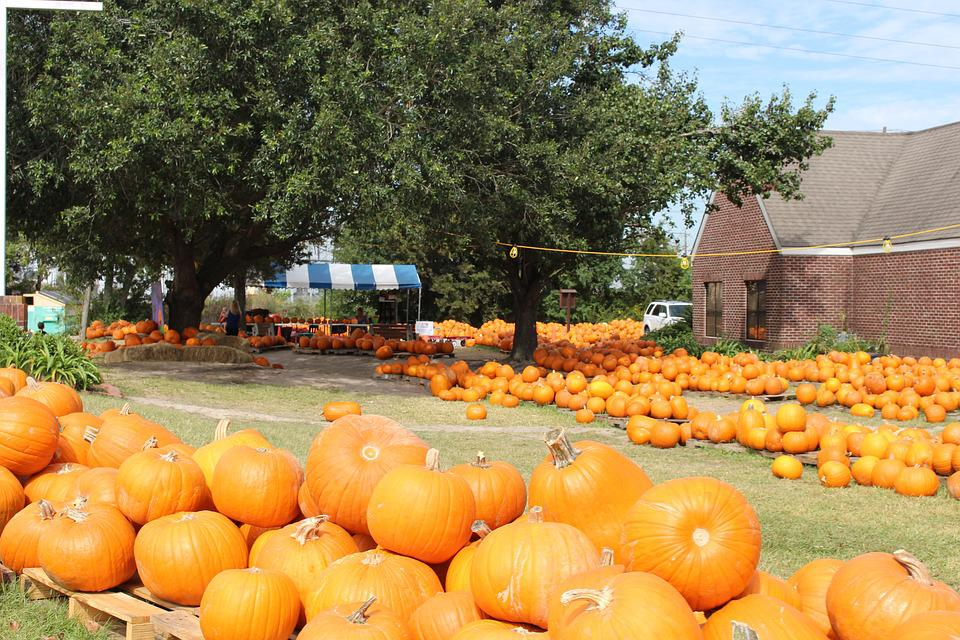 Pumpkins, Fall, Autumn, Pumpkin Patch, Orange, Harvest