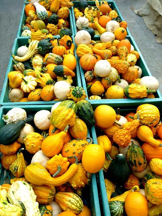 Pumpkins, Cucurbitaceae, Plant, Vegetables, Autumn