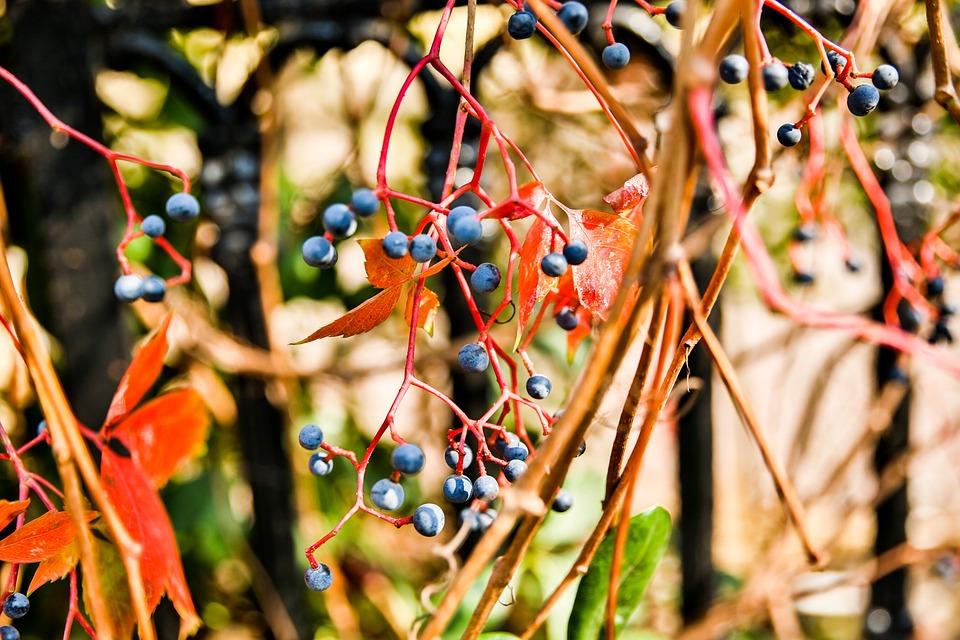 China, Qingdao, Autumn, Close-up