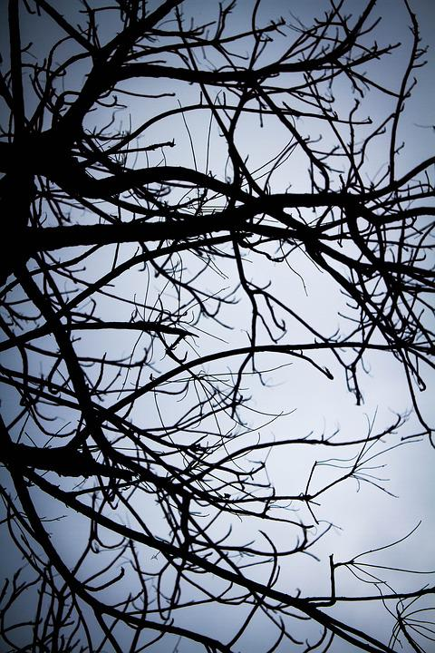 Shadow, Twigs, Lonely, Leafless, Winter, Autumn, Rain