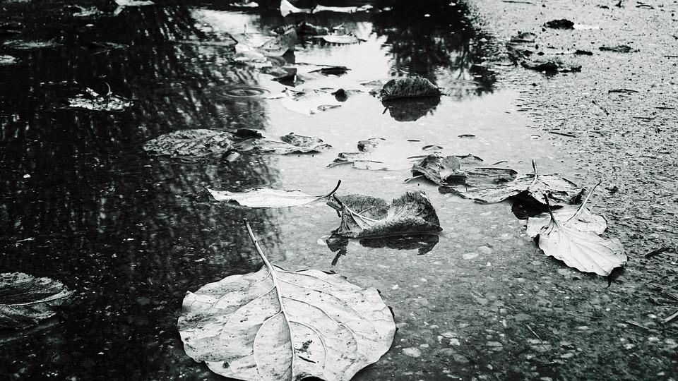 Autumn, Puddle, Reflections, Leaves, Rain, Nature