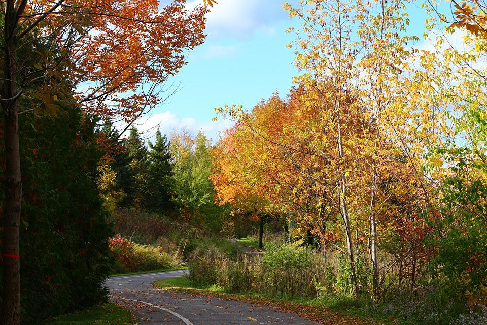 Fall, Colors, Red, Leaves, Autumn, Nature, Colorful