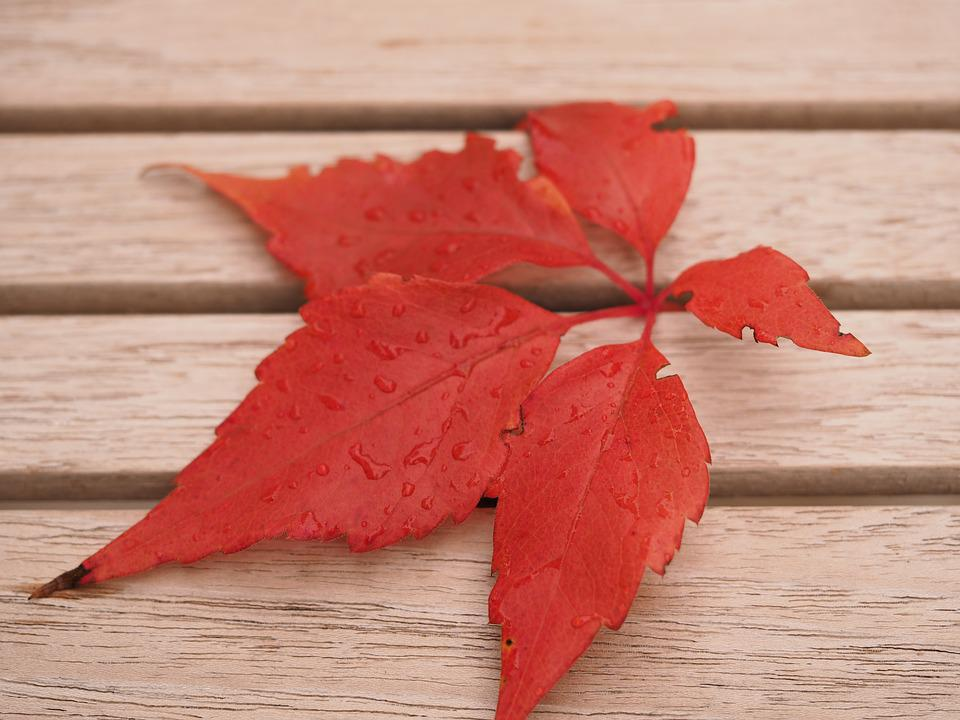 Autumn, Leaf, Red, Fall Foliage, Red Leaves