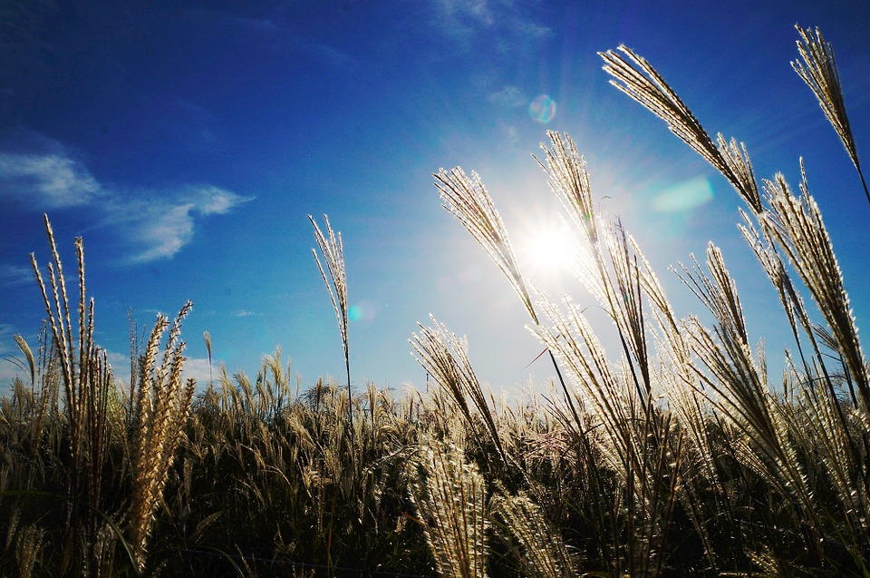 Reed, Sky, Light, Autumn
