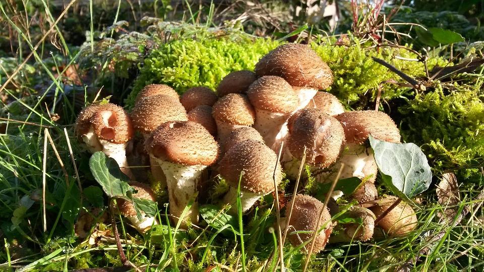 Mushrooms, Autumn, Seasons, Forest Mushrooms