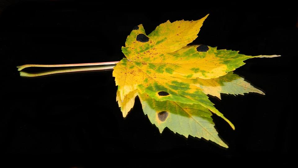Sheet, Autumn, Autumn Leaves, Autumnal