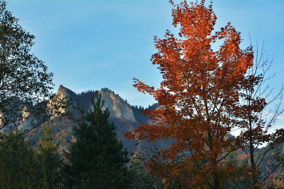 Autumn, Mountains, Landscape, Forest, Nature, Tree, Sky