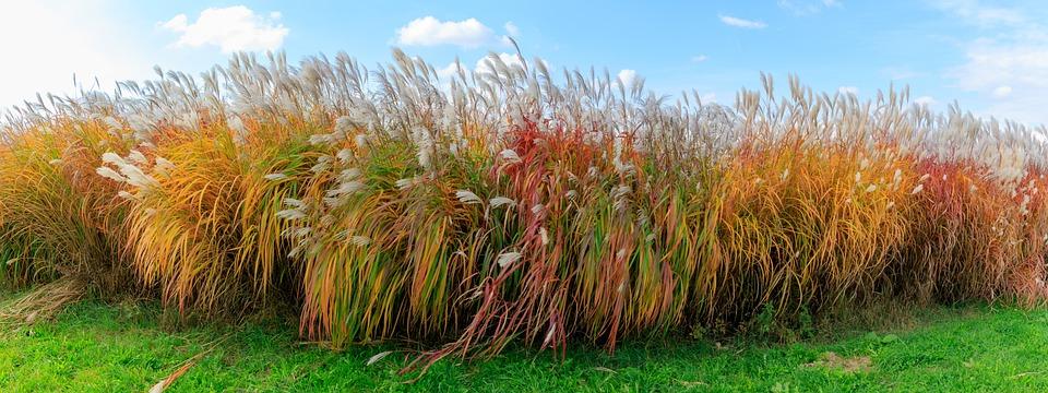 Autumn, Grass, Grasses, Sky, Color, Colorful