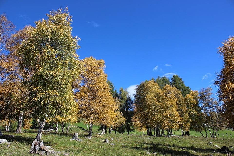 Tree, Nature, Landscape, Sky, Leaf, Autumn, Mariapfarr