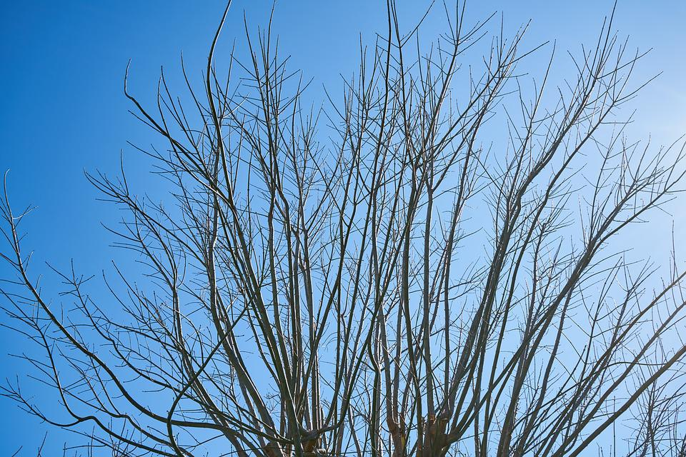 Tree, Branches, Sky, Season, Winter, Spring, Autumn