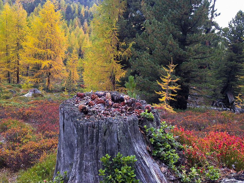 Autumn, Autumn Colours, South Tyrol, Yellow, Brown, Red