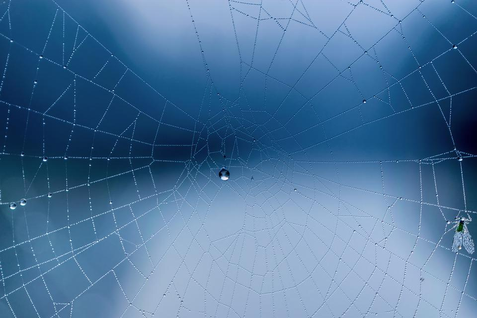 Autumn, Winter, Dew, Blue Hour, Morning, Spider Webs