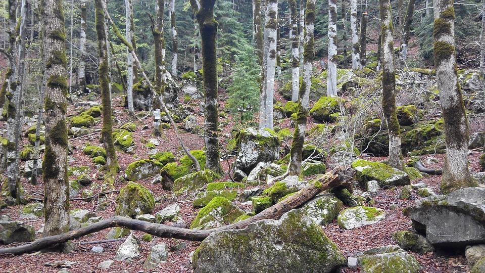 Forest, Autumn, Stones, Trees