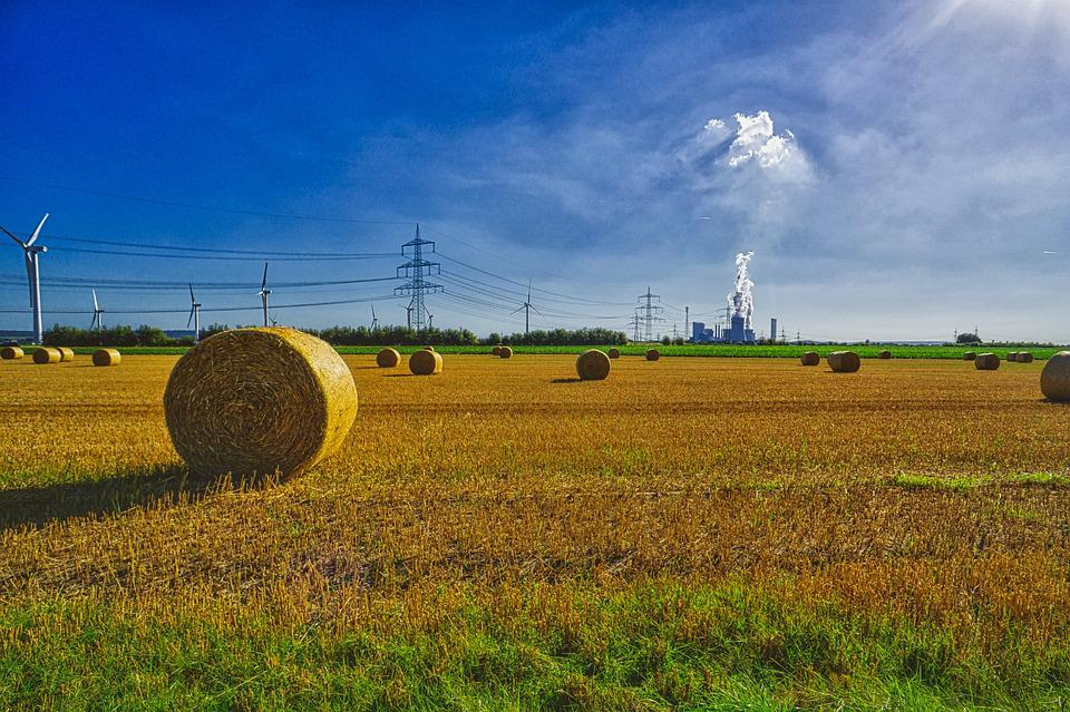 Autumn, Straw, Agriculture, Field, Straw Role, Harvest