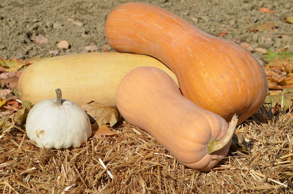 Pumpkin, Autumn, Straw, Orange