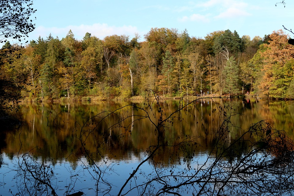 Lake, Autumn, Nature, Bear Lake, Stuttgart, Reflect