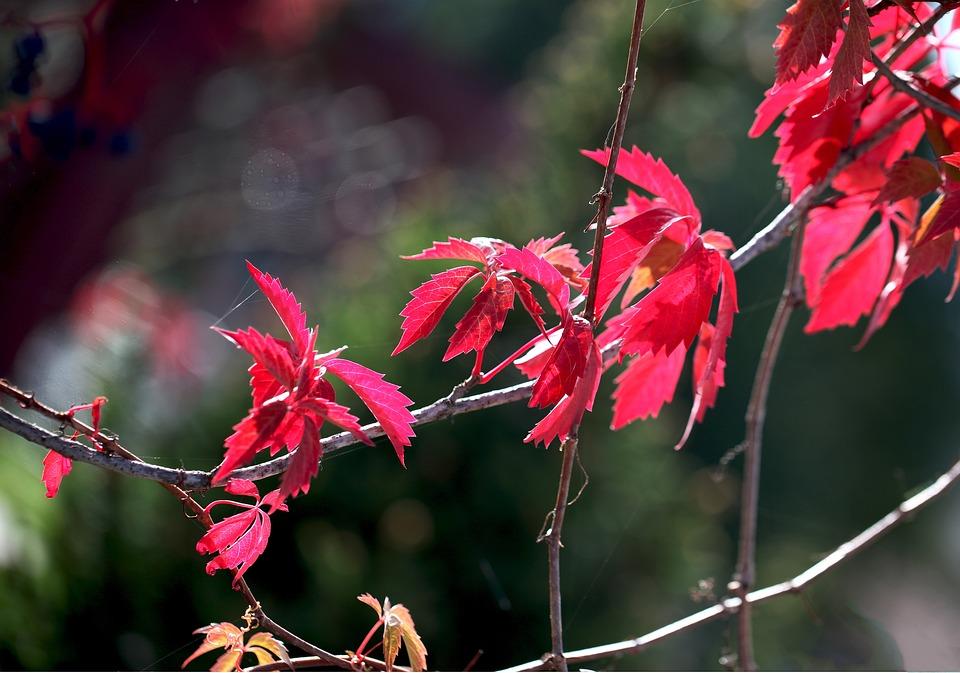 Foliage, Flora, Summer, Autumn, Season, Twigs, Leaves