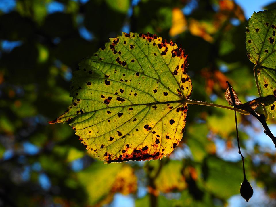 Leaf, Leaves, Autumn, Sunny, Colorful, Fall Color