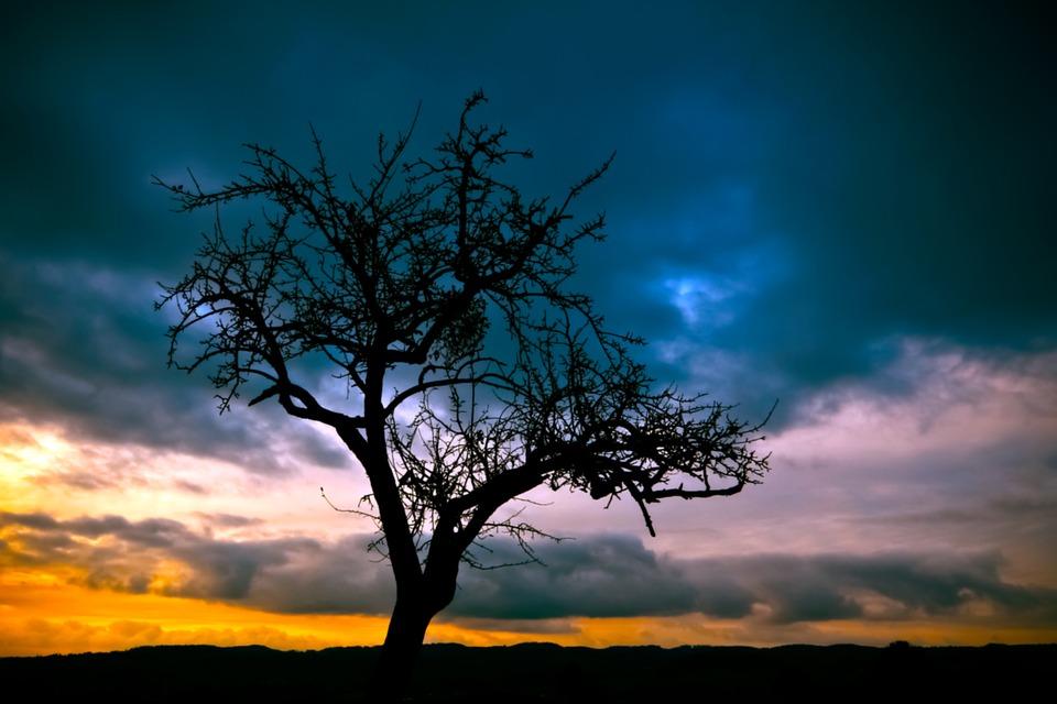 Tree, Sunset, Landscape, Nature, Autumn, Colorful