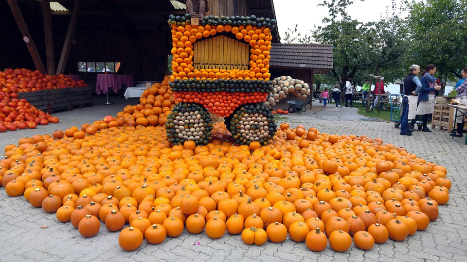 Pumpkin, Thanksgiving, Harvest, Autumn, Healthy