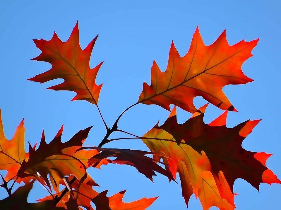 Foliage, Autumn, The Decrease In, Autumn Gold, Colors