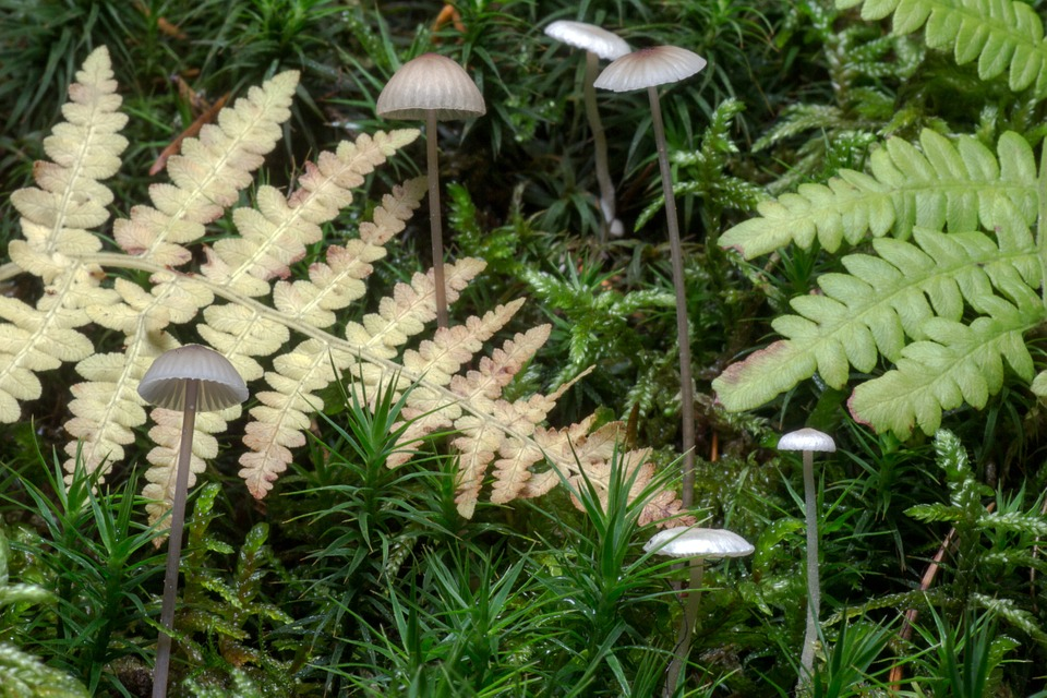 Mushrooms, Forest, Moss, Leaves, Autumn, Toxic, Macro