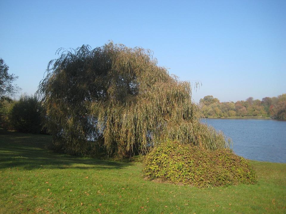 Tree, Babelsberg, Autumn