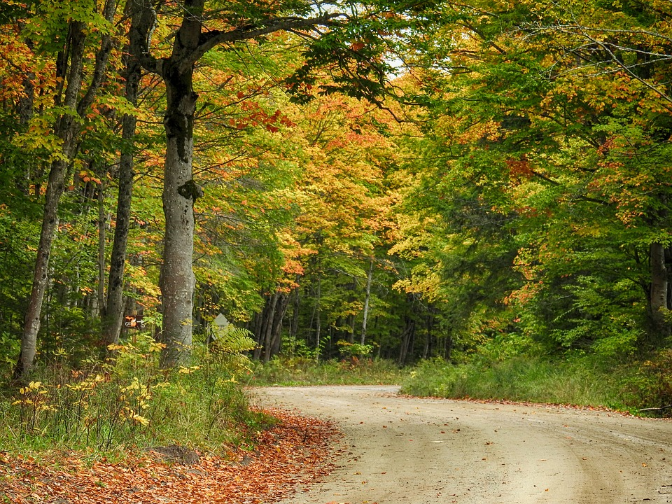 Fall, Autumn, Colors, Nature, Leaves, Forest, Tree