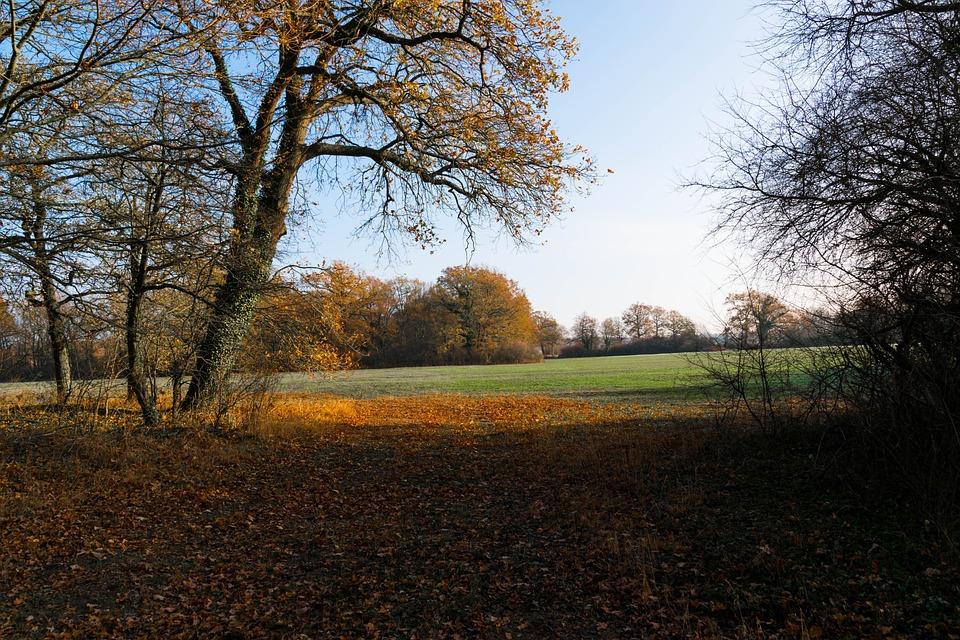 Autumn, Meadow, Nature, Landscape, Mood, Tree, Idyllic
