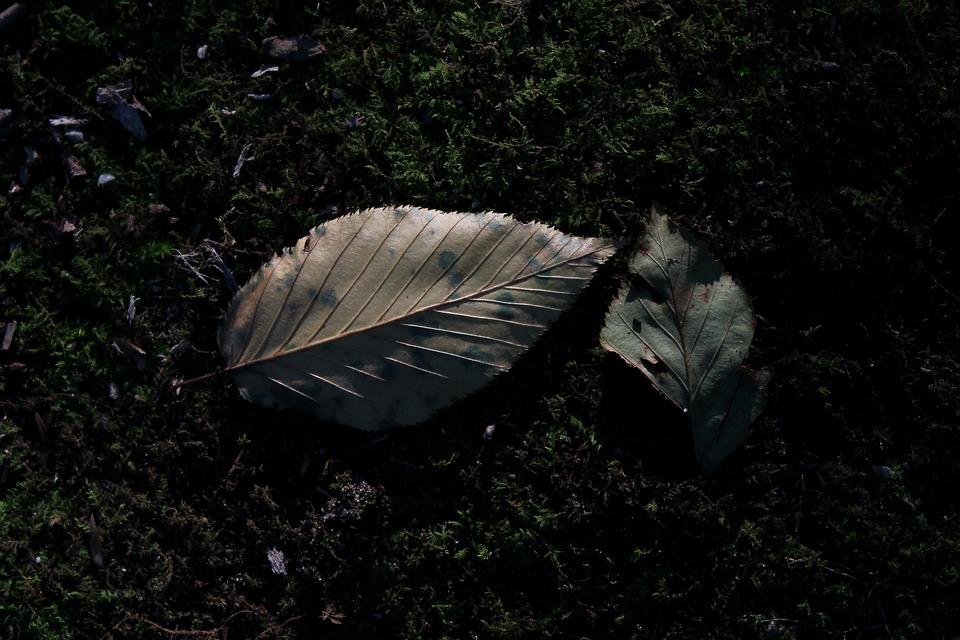 Leaves, Fall, Autumn, Nature, Tree, Forest, Leaf, Mood