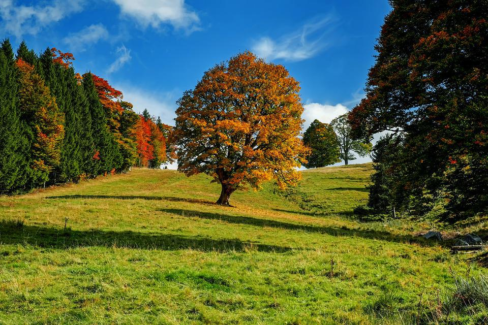 Tree, Autumn, Forest, Landscape, Idyllic, Mood, Nature