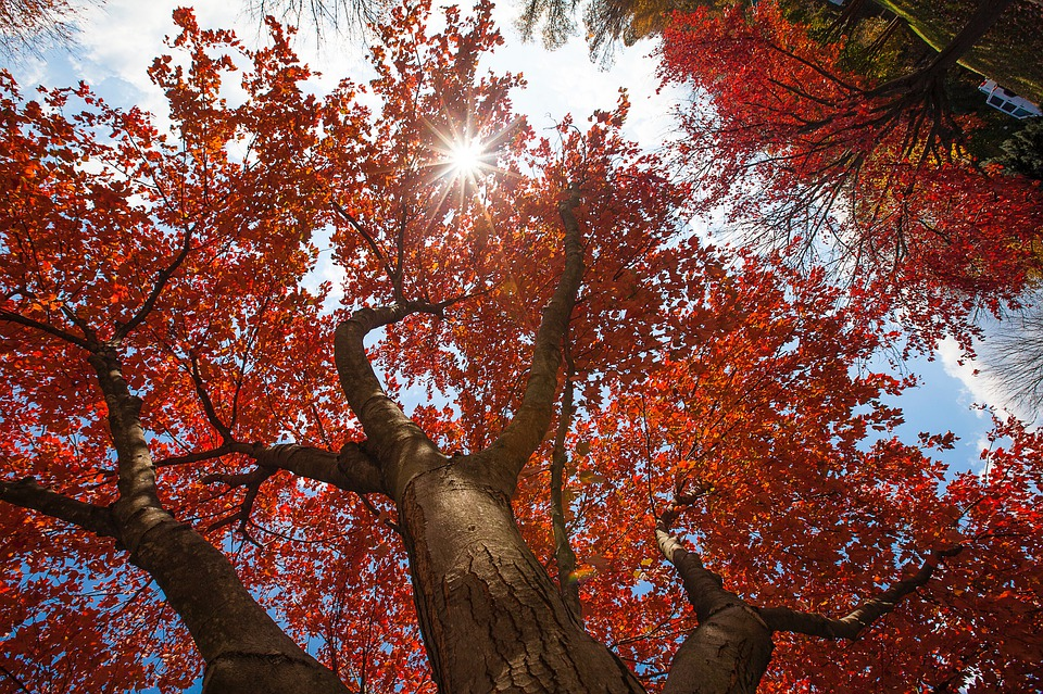 Tree, Fall, Autumn, Nature, Leaves, Trees, Landscape