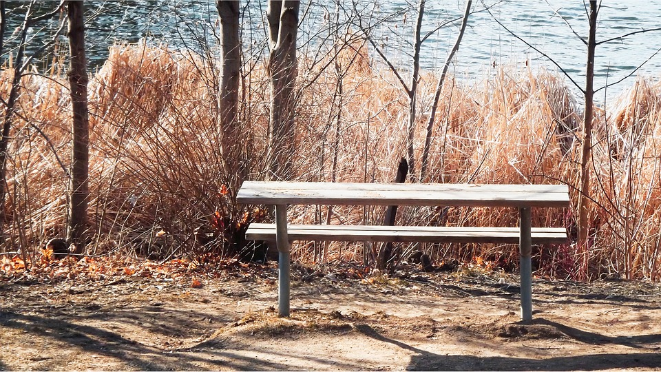 Nature, Tree, At The Court Of, Autumn, Season, Bench