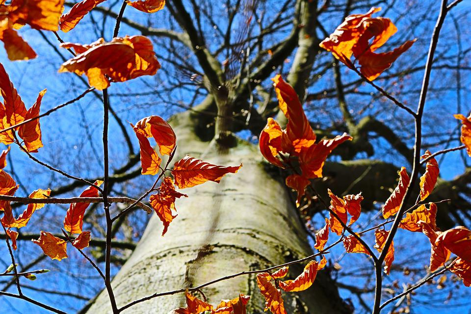 Tree, Leaf, Autumn, Season, Branch