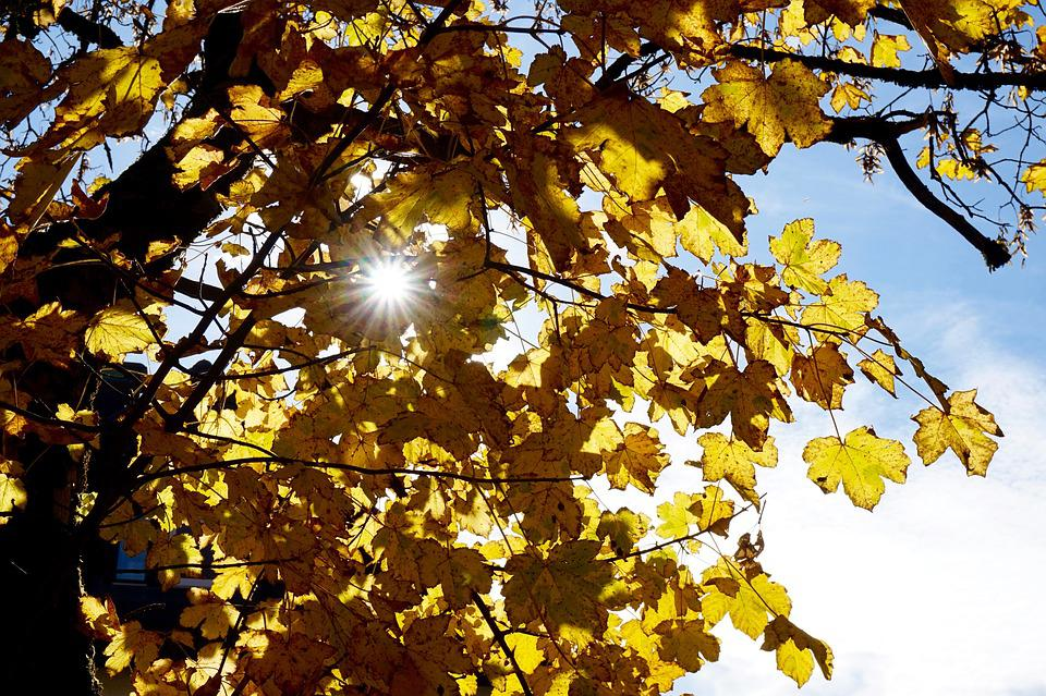 Leaf, Tree, Season, Branch, Autumn, Sun, Ray Of Light