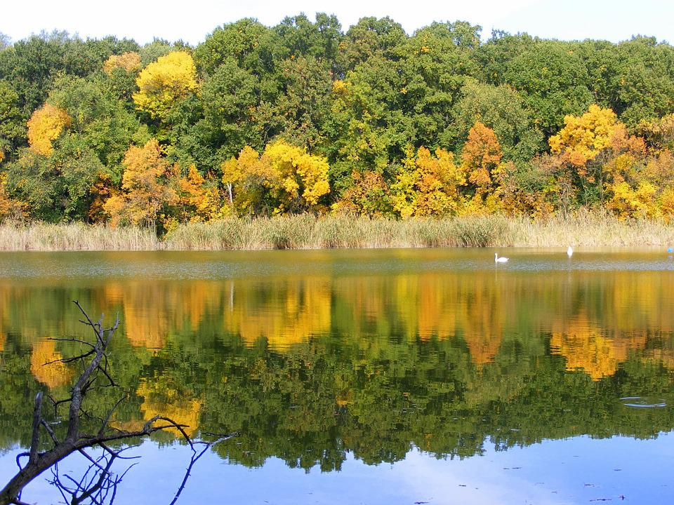Autumn, Landscape, Lake, Trees, Leaf, Mirror, Feerie