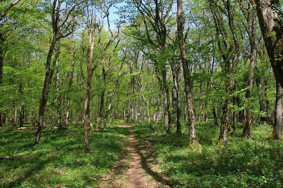 Path, Forest, Rural, Nature, Trees, Autumn, Landscape