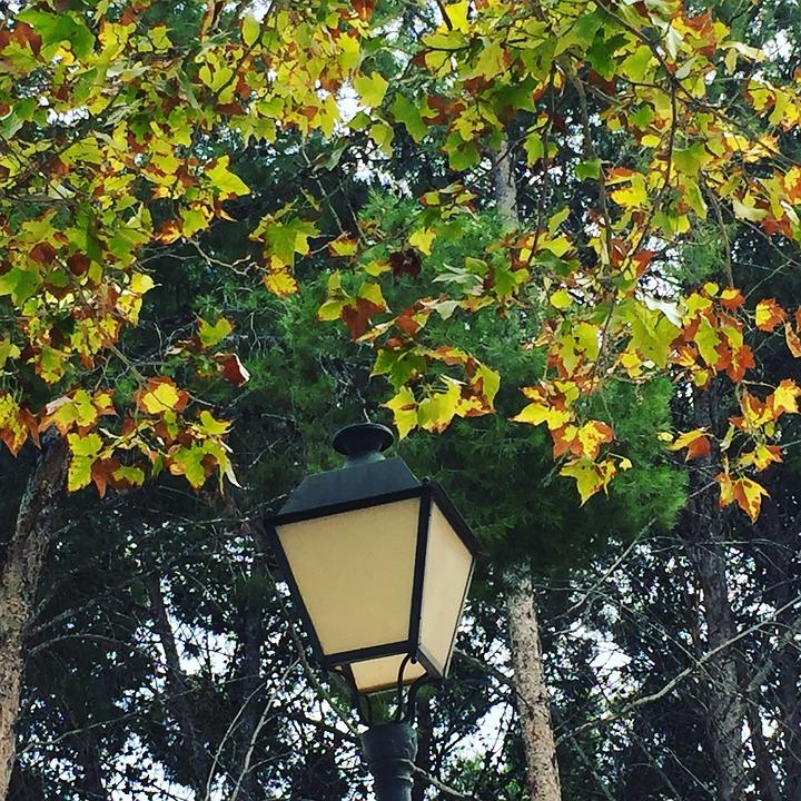 Tree, Green, Brown, Autumn, Light, Lamp, Park, Trees