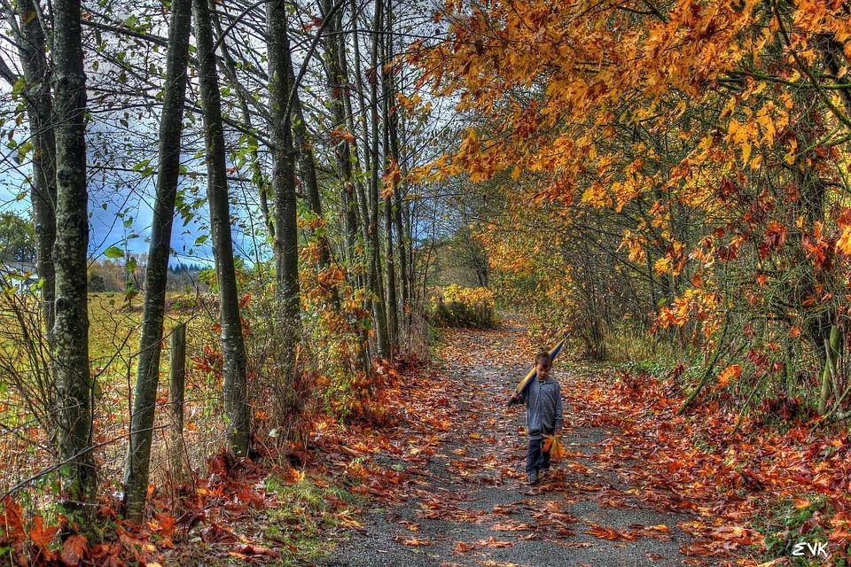 Leaves, Boy, Umbrella, Trees, Trail, Autumn