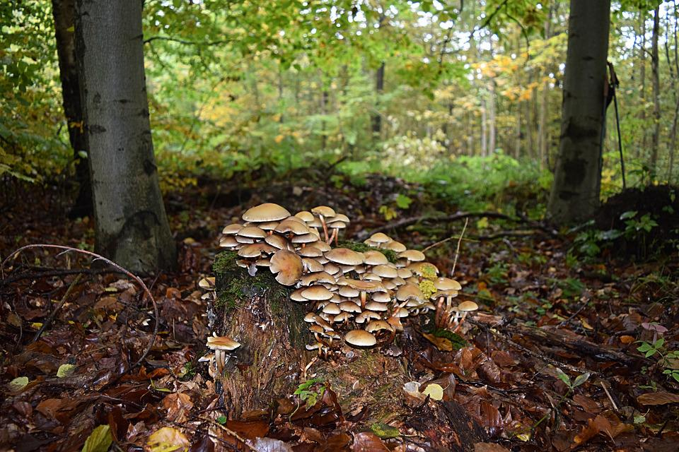 Tree Fungus, Autumn, Tribe