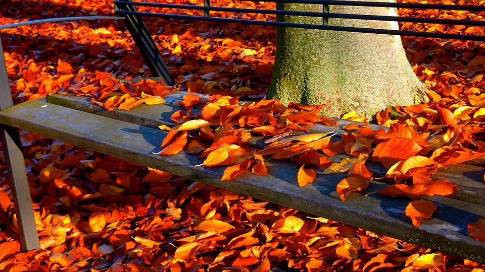 Autumn, Autumn Forest, Autumn Walk, Fall Leaves, Trees