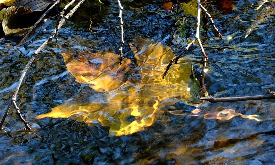 Autumn Leaf, Water, Mirroring, Golden, Autumn