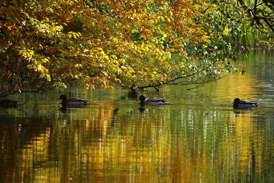 Autumn, Water, Fall Foliage, Fall Color, Mirroring