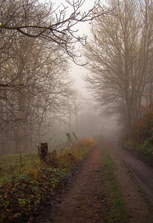 Way, Autumn, The Fog, Haze, Dirt Road, Tree, Branches