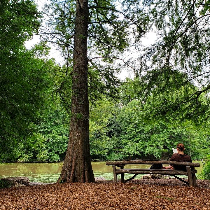 Books, Banking, Read, Tree, Autumn, Rest, Wellness